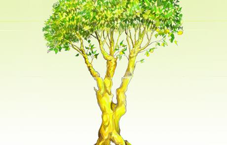 arbre-curiositas-thumb